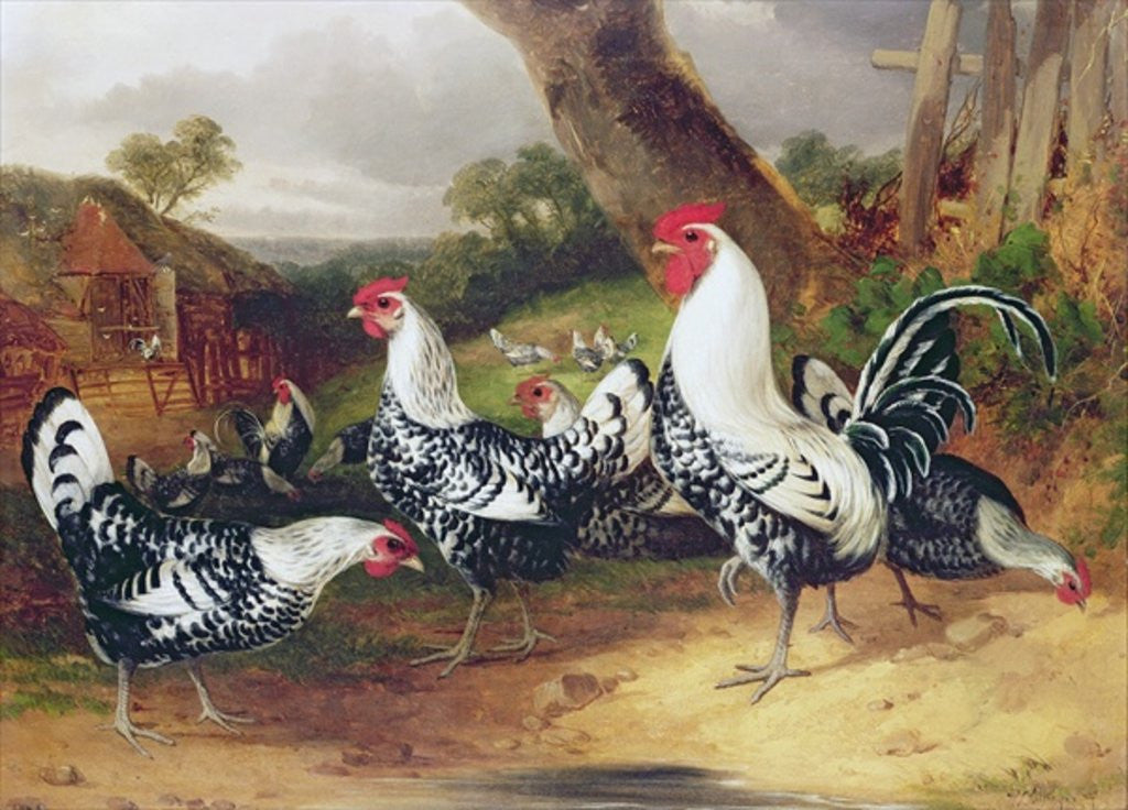 Detail of Cockerels in a Landscape by William Joseph Shayer