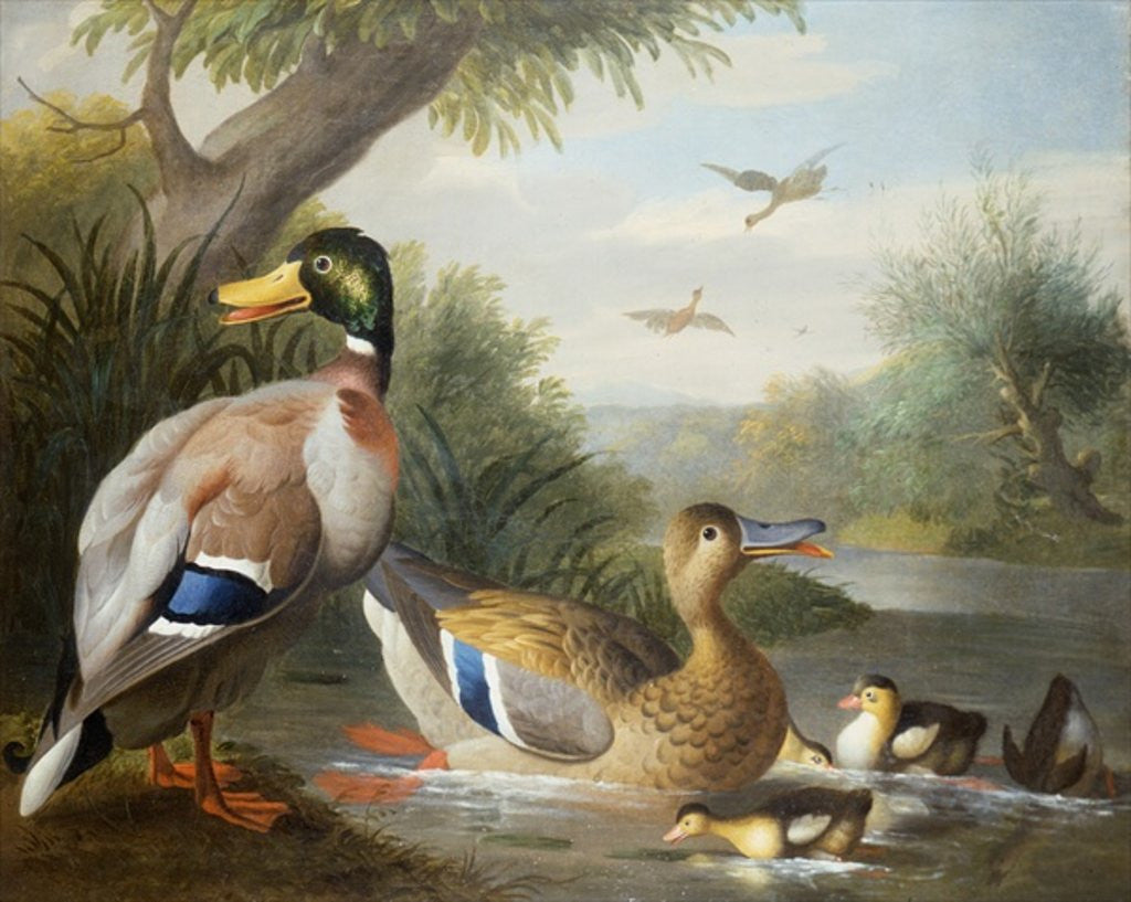 Detail of Ducks in a River Landscape by Jakob Bogdani or Bogdany