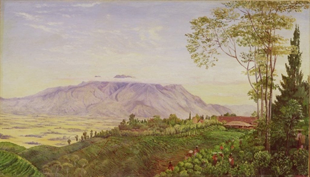 Tea Gathering in Mr Hoelle's plantation at Garoet, Java by Marianne North