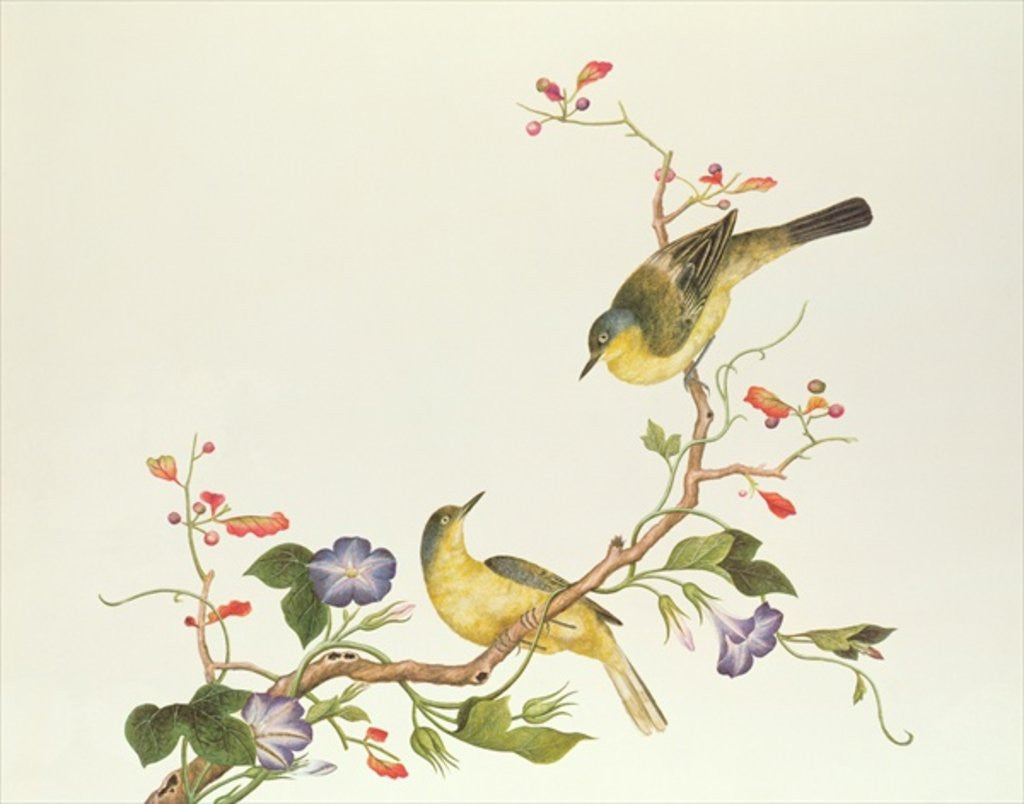 Detail of Yellow Wagtail with blue head, Ch'ien-lung period by Qing Dynasty Chinese School