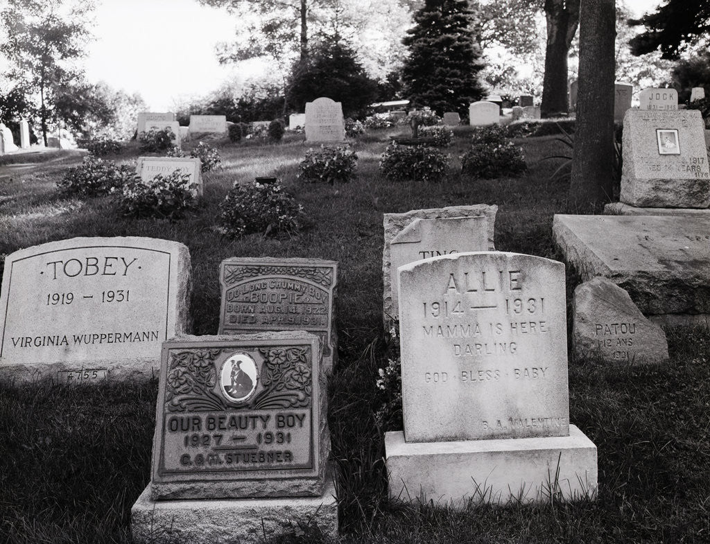 Detail of Hartsdale Canine Cemetery by Corbis