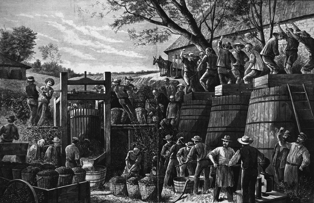Detail of Chinese Laborer Pressing Grapes by Corbis
