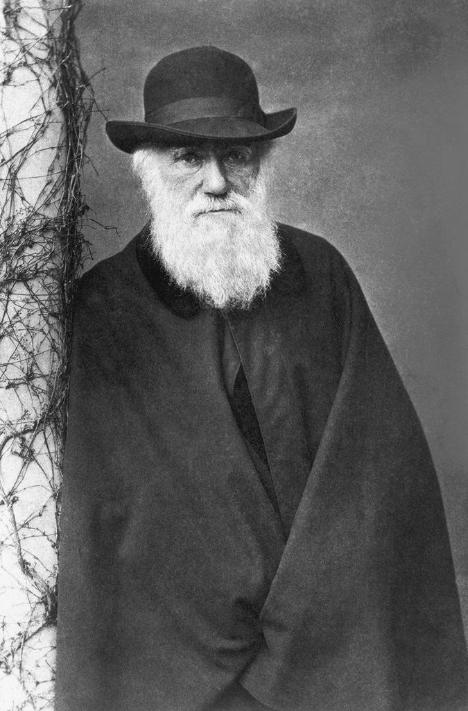 Detail of Charles Darwin by Corbis