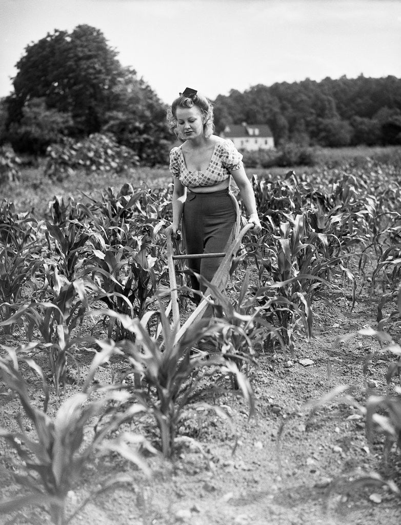 Detail of Woman Cultivating Corn Field by Corbis