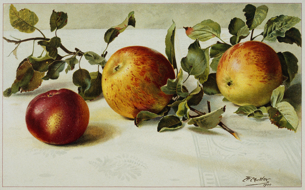 Detail of Book Illustration of Apples by Fairfax Muckler