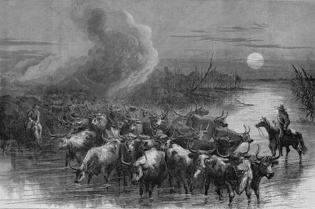 Detail of A drove of Texas cattle crossing a stream by A. R. Waud