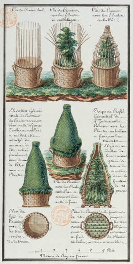 Detail of Illustration of a woven basket for transporting plants by Gaspard Duche de Vancy