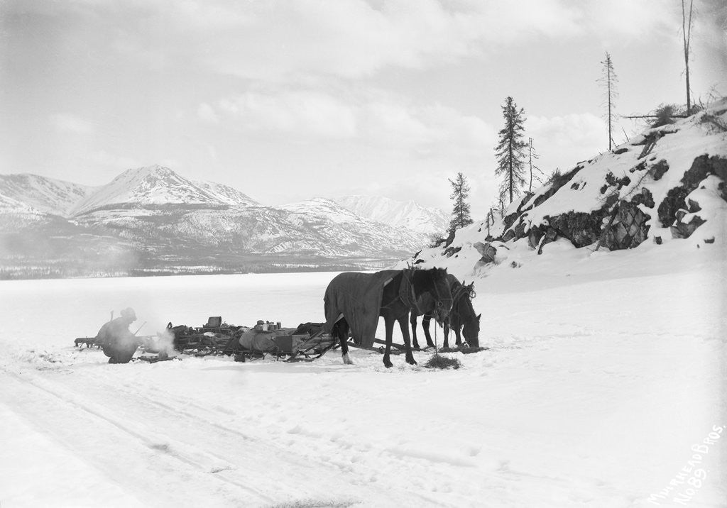 Detail of Horses and Sledge in the Klondike by Corbis