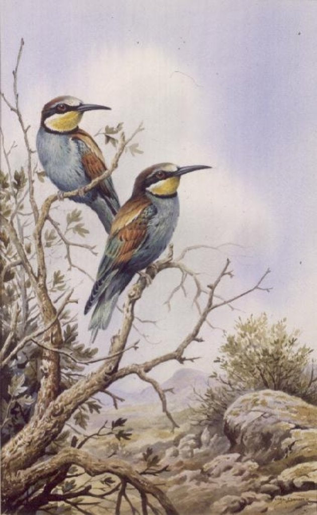 Detail of Bee-Eaters by Carl Donner
