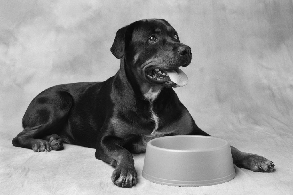 Detail of Dog Waiting at Bowl by Corbis