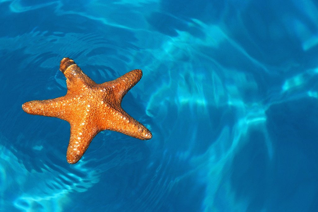 Detail of Starfish Floating on the Surface of the Ocean by Corbis