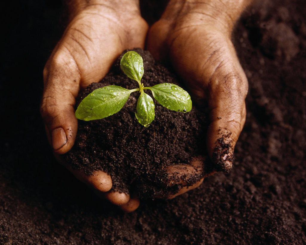 Detail of Hands Holding a Seedling and Soil by Corbis
