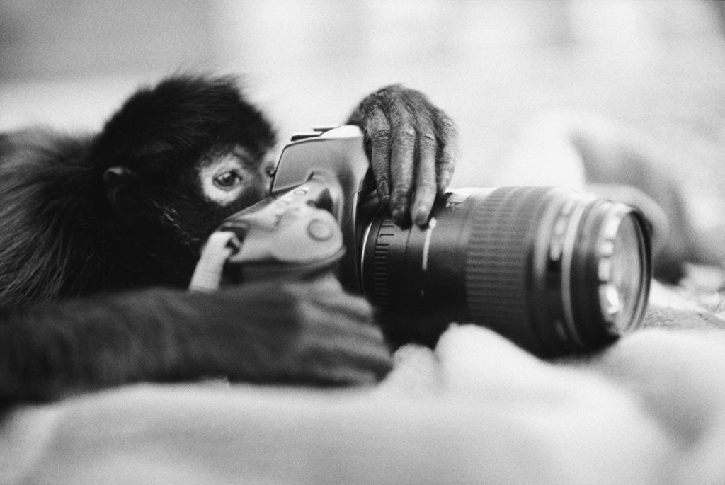 Detail of Monkey Holding Camera by Corbis