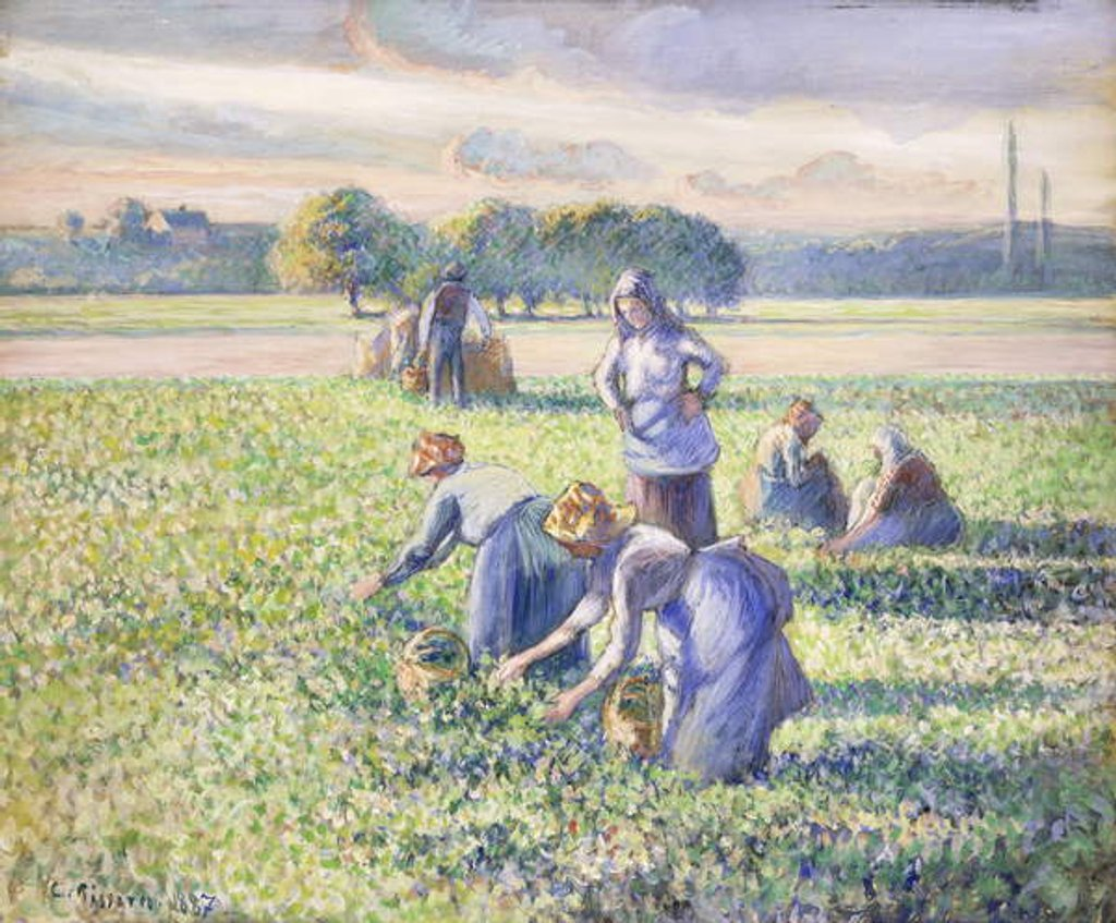 Detail of The Harvest of Peas, 1887 by Camille Pissarro