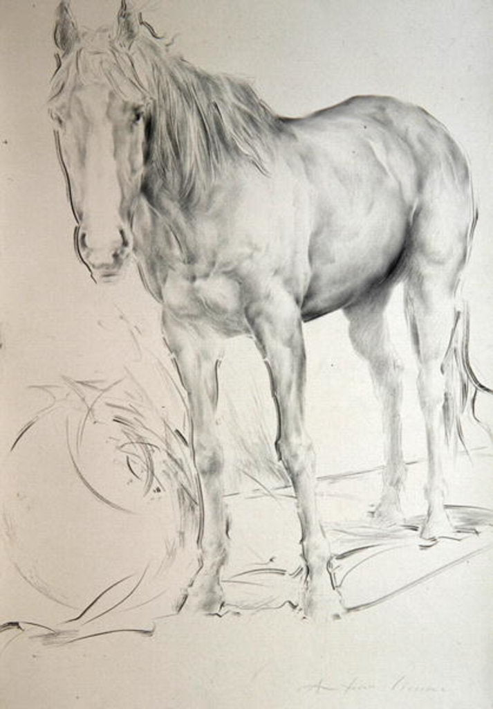 Detail of Horse at Coolmore, 1990 by Antonio Ciccone