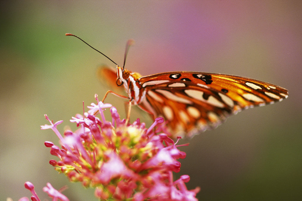 Detail of Butterfly Perching on Flower by Corbis