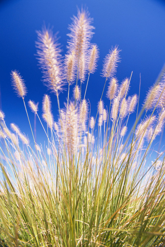 Detail of Growing Grass by Corbis