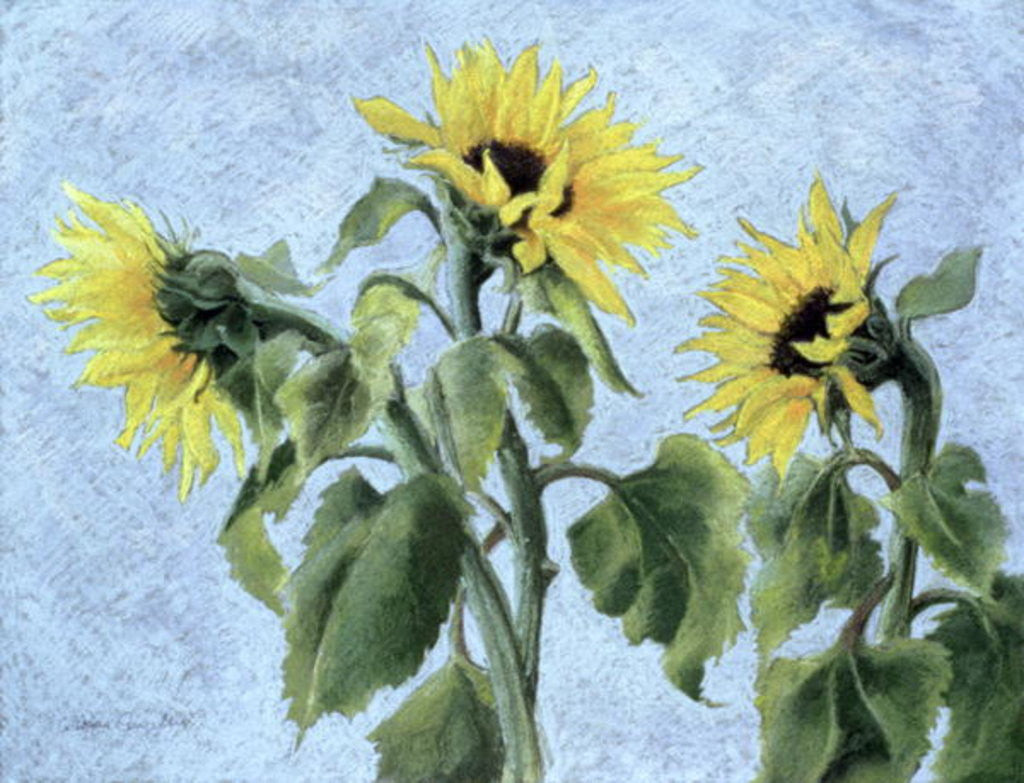 Detail of Sunflowers by Cristiana Angelini