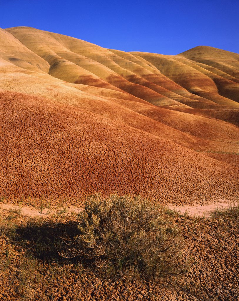 Detail of Oregon's Painted Hills by Corbis