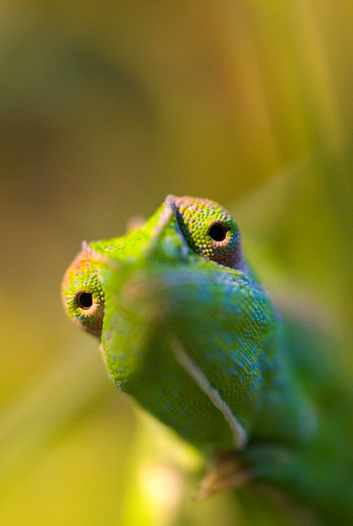 Detail of chameleon by Wolfgang Simlinger
