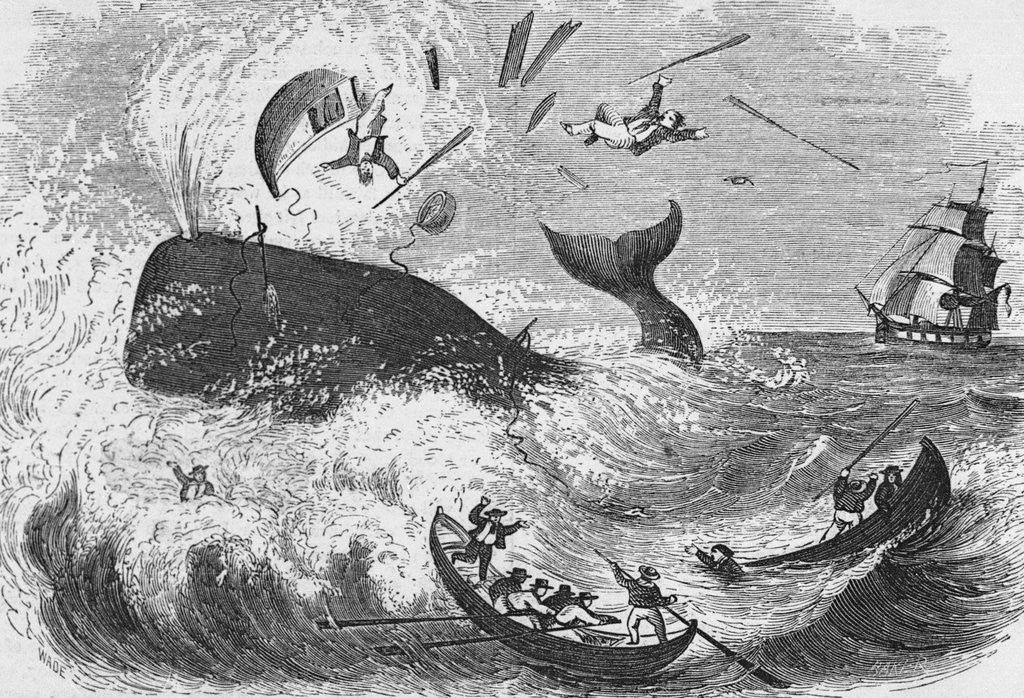 Detail of Whaling, The Flurry, Woodcut by Corbis