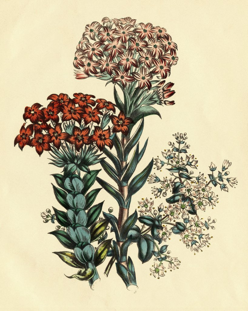 Detail of Illustration of Leafy and Colorful Flowers by Corbis