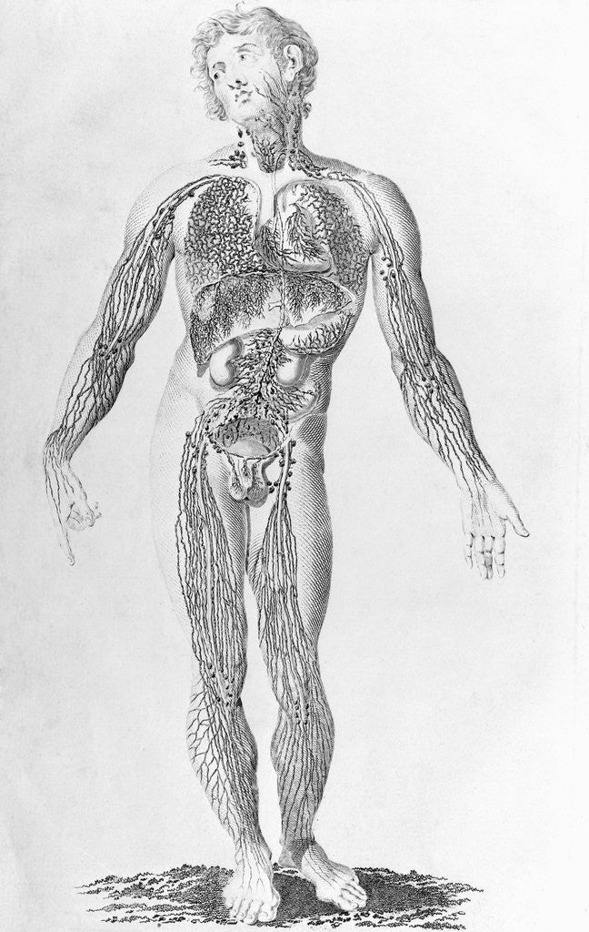 Detail of Diagram Depicting Blood Vessel Distribution by Corbis