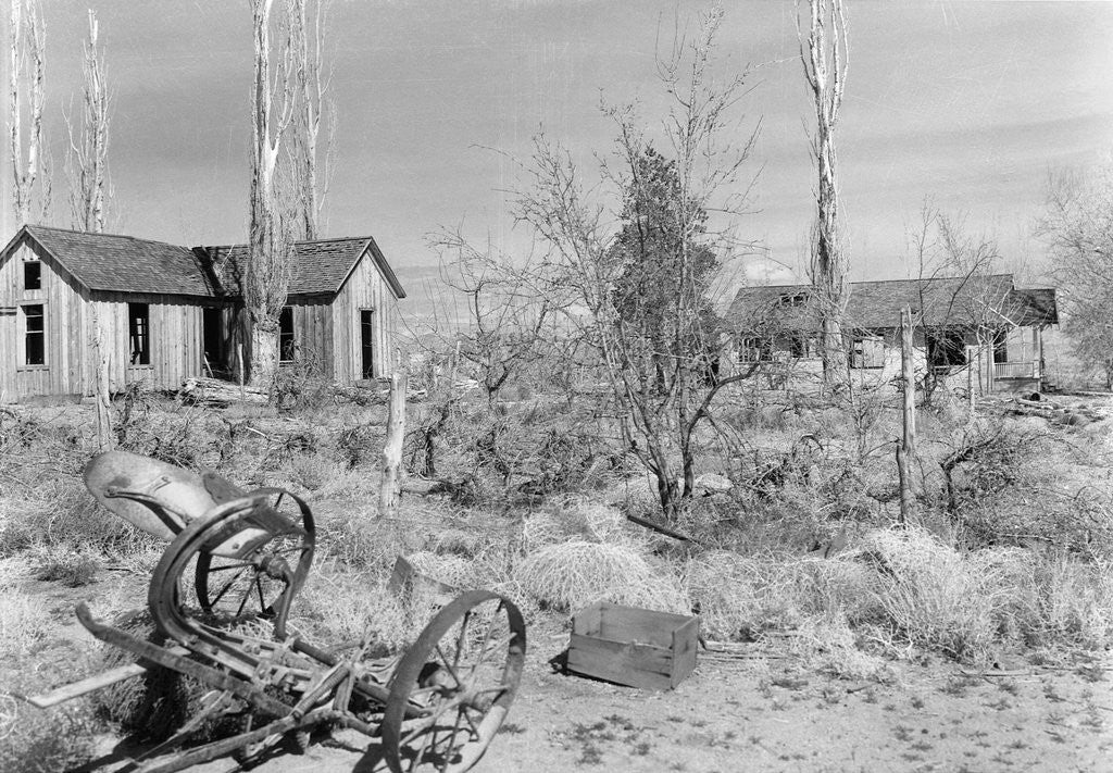 Detail of Abandoned Ranch in Owens Valley by Corbis