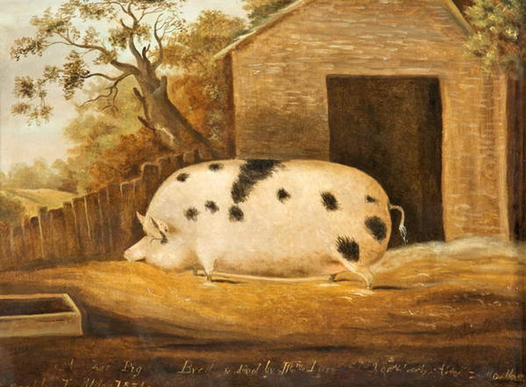 Detail of Gloucester Old Spot Pig, 1834 by John Miles of Northleach