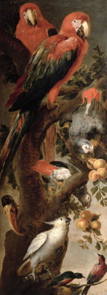 Detail of Macaws and Parrots by Frans Snyders or Snijders