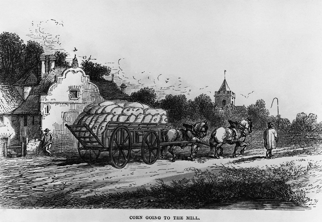 Detail of Corn Going to the Mill by Corbis