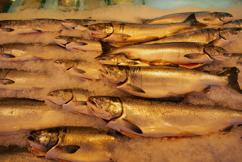 Detail of Fresh Fish at Pike Place Market by Corbis