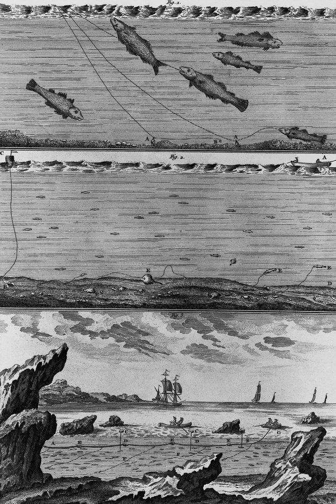 Detail of Engraving of Cod Fishing by Corbis