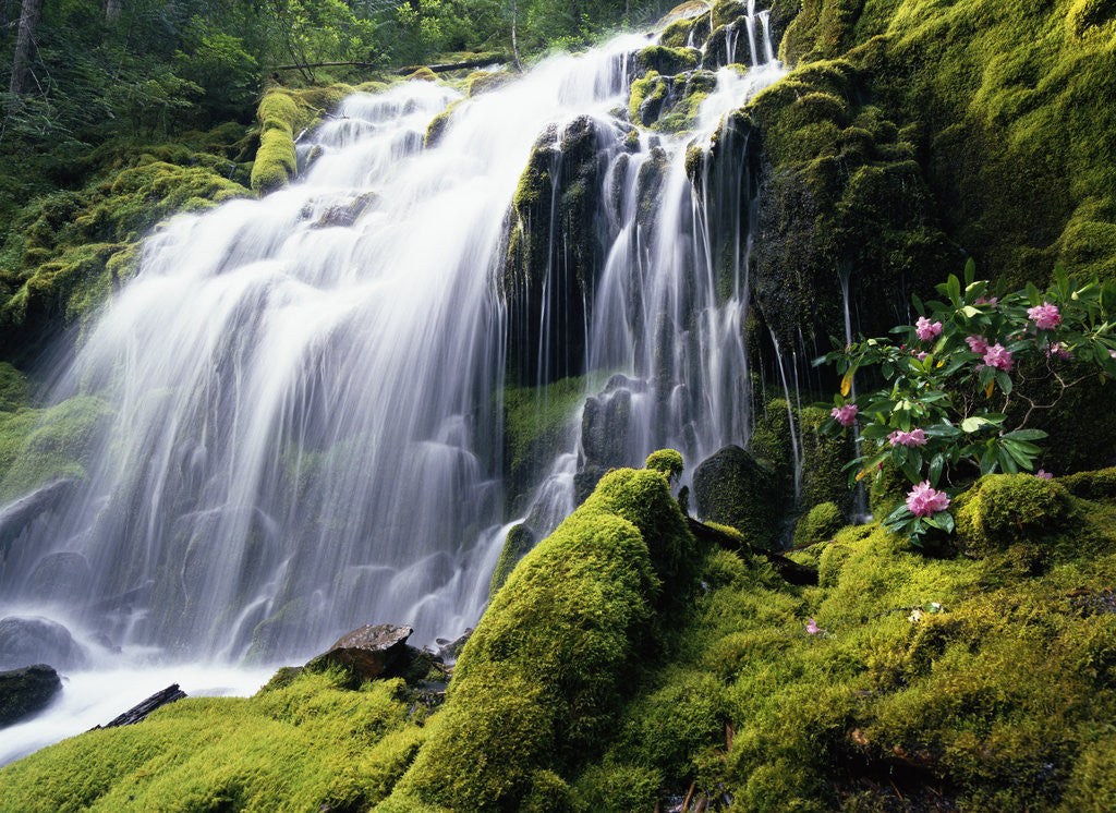 Detail of Proxy Falls in Oregon by Corbis
