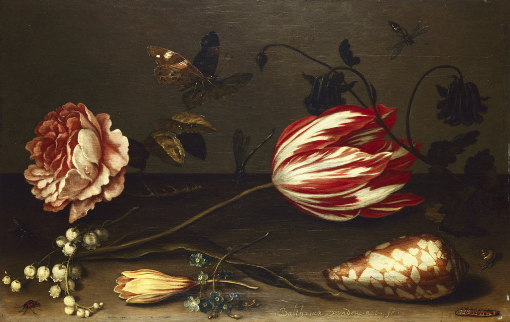 Detail of Flowers, Insects, and a Shell by Balthasar van der Ast
