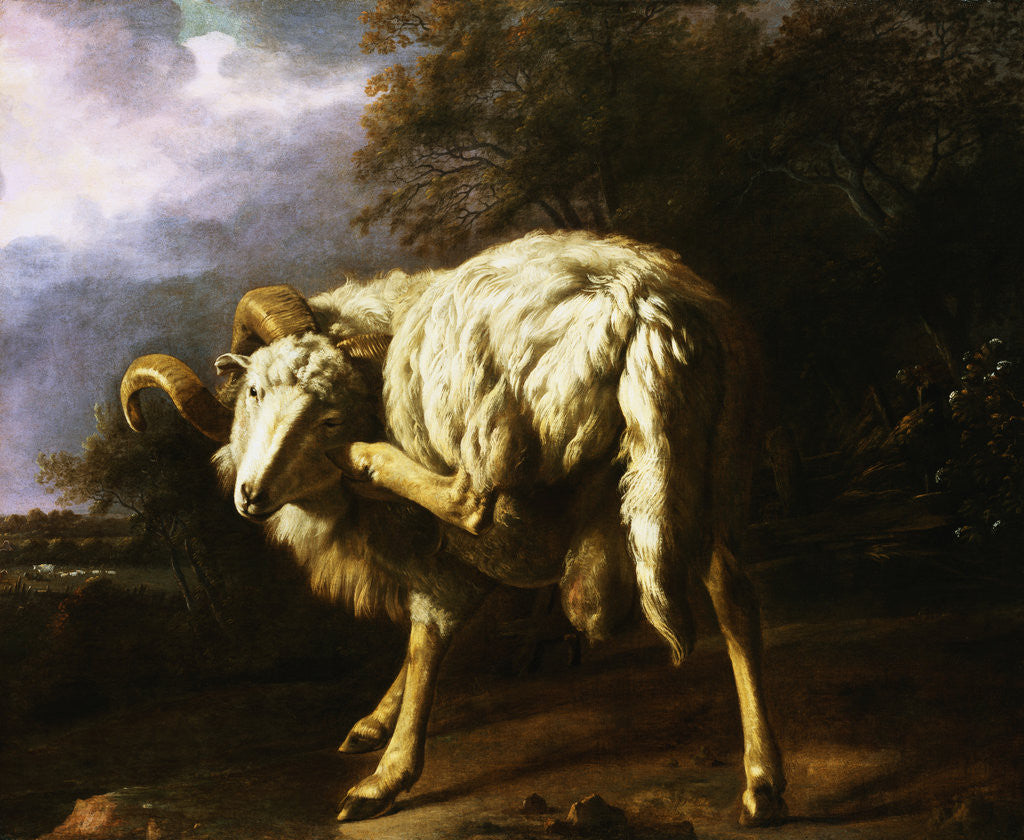 Detail of A Ram in a Wooded Landscape Attributed to Jan Baptist Weenix by Corbis