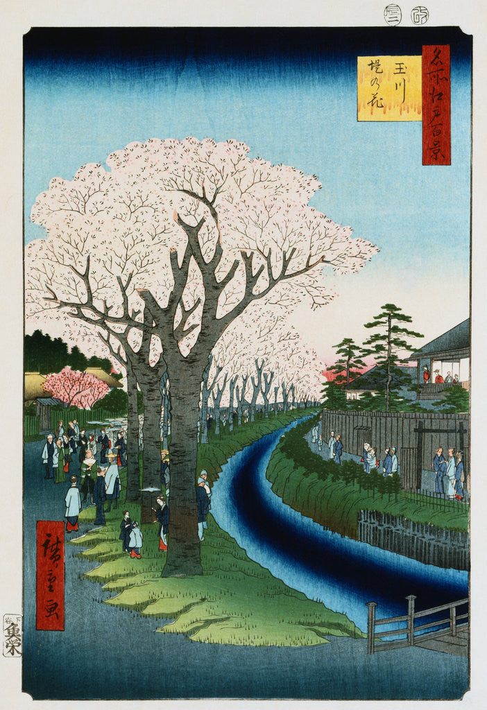 Detail of Cherry Blossoms, Tama River Embankment by Ando Hiroshige