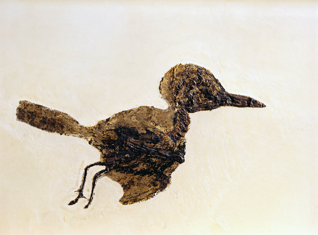 Detail of Fossil of Small Bird from Messel Site by Corbis
