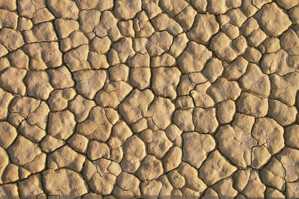 Detail of Cracked, Dry Lake Bottom Pattern in Death Valley by Corbis