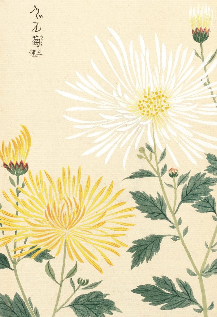 Detail of Honzo Zufu [Yellow & White Chrysanths] by Kan'en Iwasaki