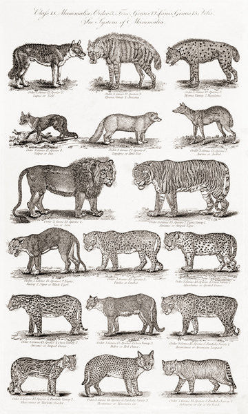 Detail of Different types of Quadrupeds by Unknown artist