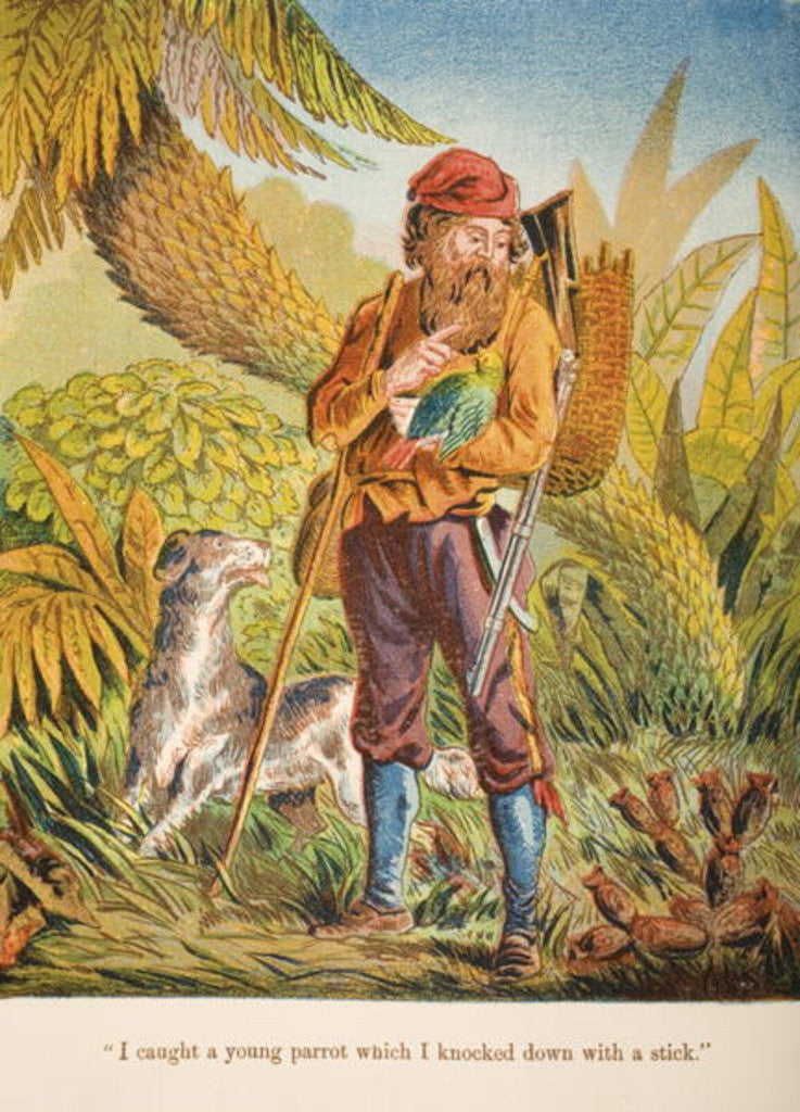 Detail of 'I caught a young parrot which I knocked down with a stick.' by English School