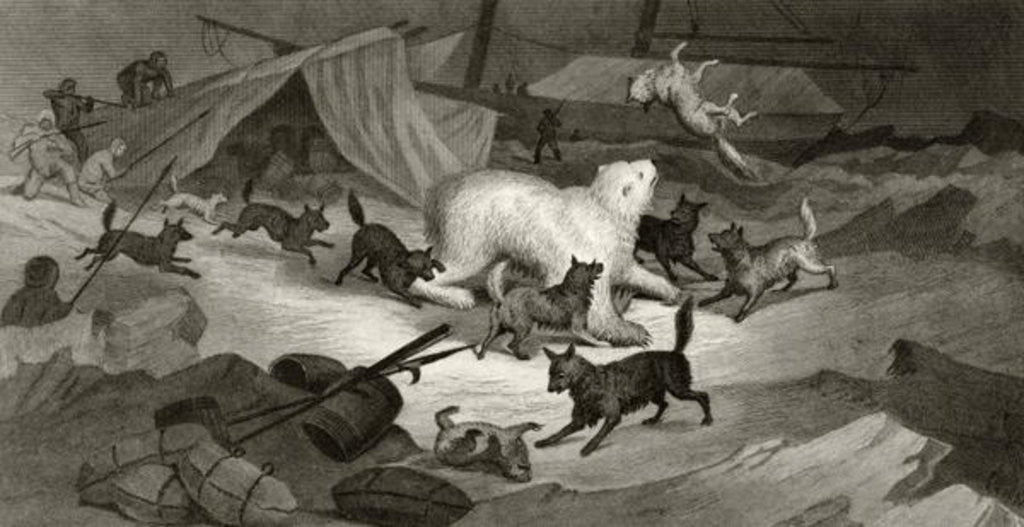 Detail of Bear Hunt by G. White
