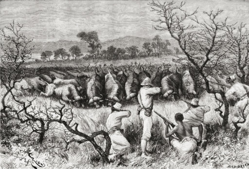 Detail of Hunting buffalo in Central Africa in the late 19th century by Spanish School