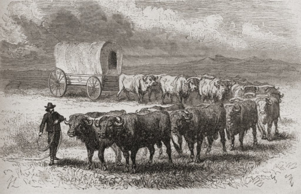 Detail of Driving oxen across the great plains of America in 1867 by Ange-Louis Janet