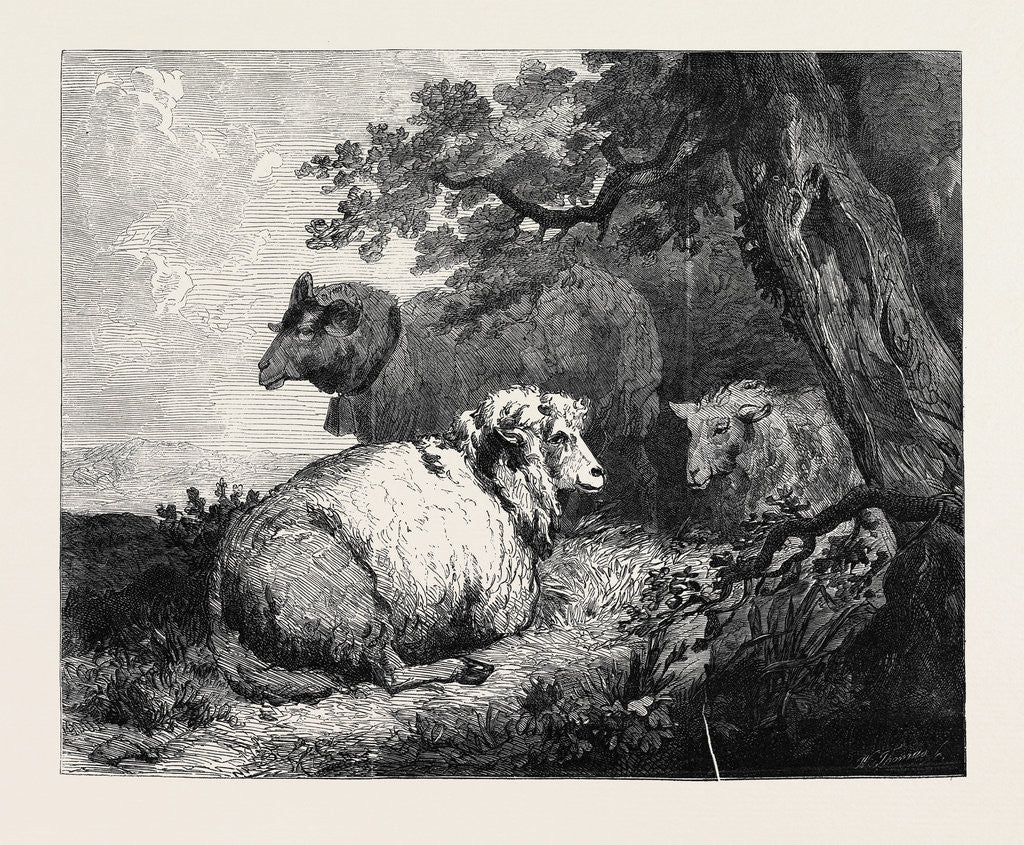 Detail of Sheep, in the International Exhibition 1862 by Anonymous