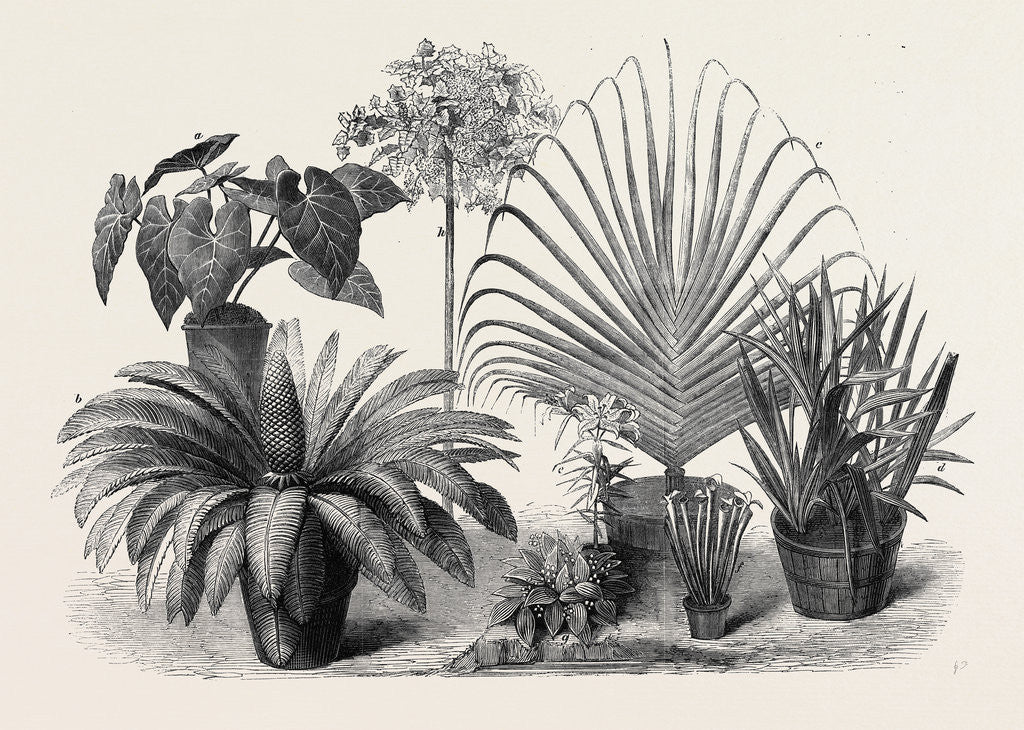Detail of Group of Rare Plants at the Late International Horticultural Exhibition South Kensington London UK 1866 by Anonymous