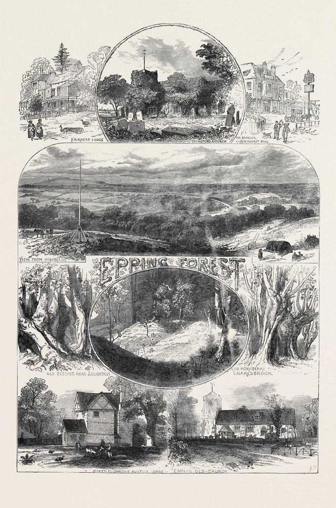 Detail of Sketches in Epping Forest 1871 by Anonymous