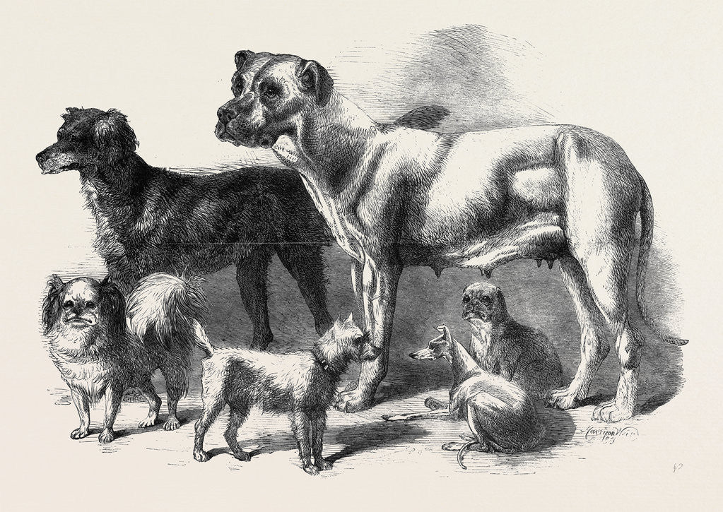 Detail of Prize Dogs at the Leeds Show August 3 1861 by Anonymous
