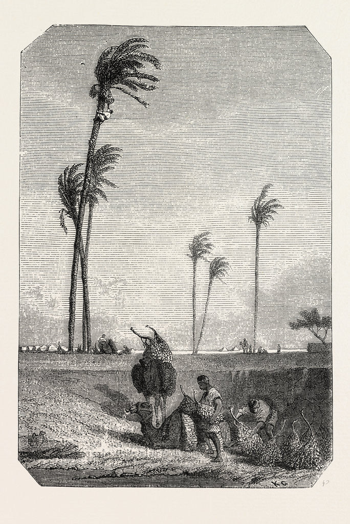 Detail of Harvest Dates in Egypt, Engraving 1855 by Anonymous